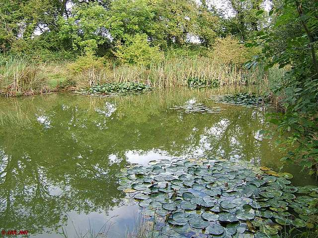 Pimlico Farm Ponds