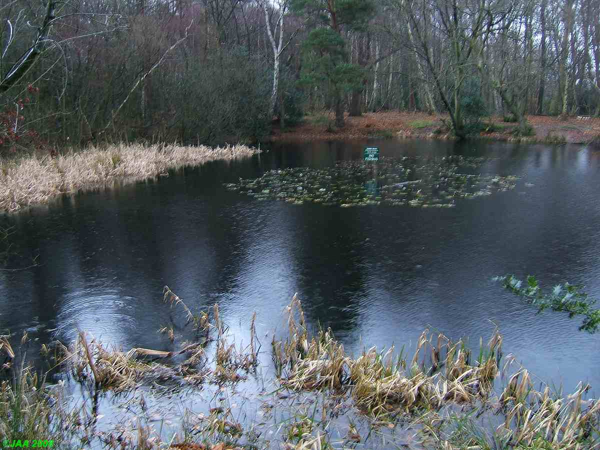 Round Pond, Cobham Heath