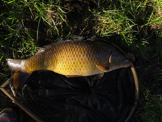 Revels Fishery Pike Lake