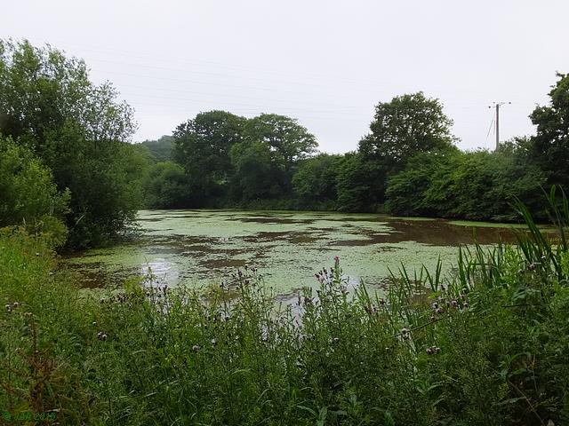 Pond near Michelham Priory