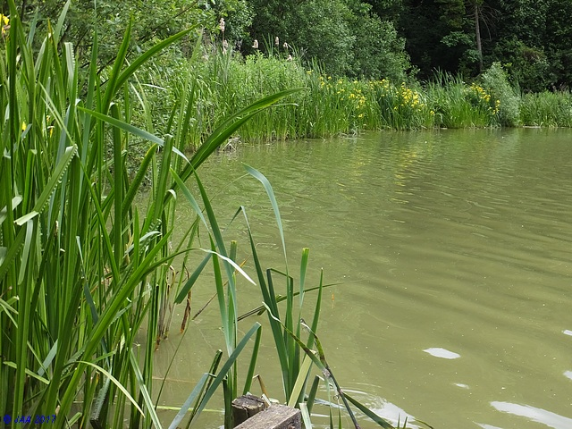 Risby Park Fishing Ponds
