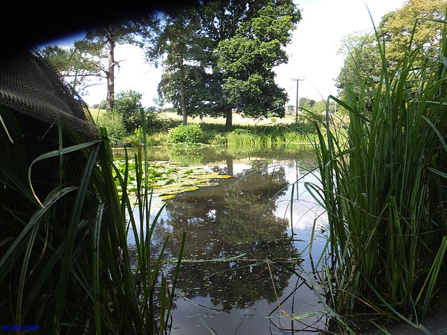 The Saxon Ponds