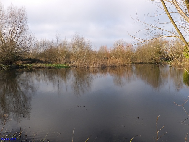 Crow Pool, Ibsley